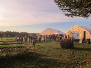 Sandiwood Farm, Wolcott