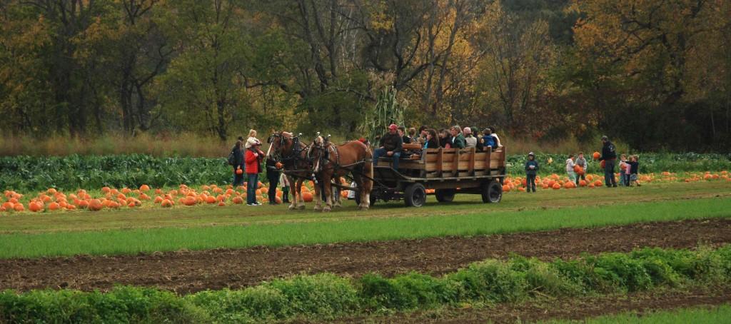 Cedar Circle Farm Horsedrawn rides to the pumpkin patch